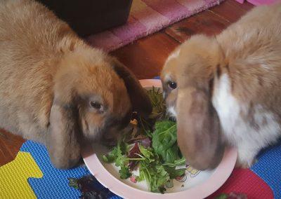 bunny_lo